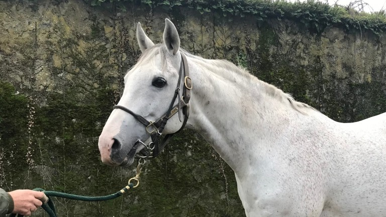 Jukebox Jury: the dashing grey looks to have a bright future ahead of him
