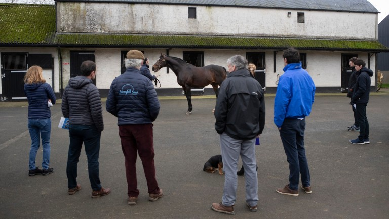 Michael Hickey gives guests the lowdown on Sunnyhill Stud star Doyen