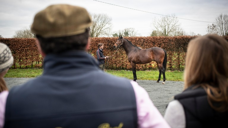 My Dream Boat stands for visitors at Clongiffen Stud