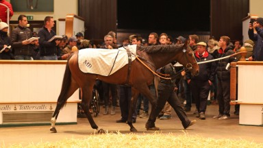 Aljazzi: the Tattersalls sales-topper is due to visit Galileo