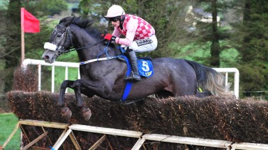 Aghabullogue PTP 13-1-19 SPRINGFIELD FOX & Roger Quinlan jump the last to win the Winners Of One Race.(Photo Healy Racing)