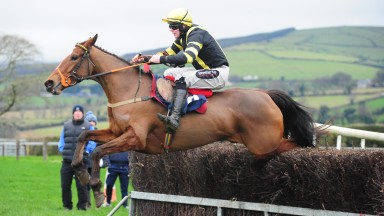 13-1-19 TINAHELY PTP DIME A DOZEN and Harley Dunne win the 5&6 year old Mares Maiden.Healy Racing Photo