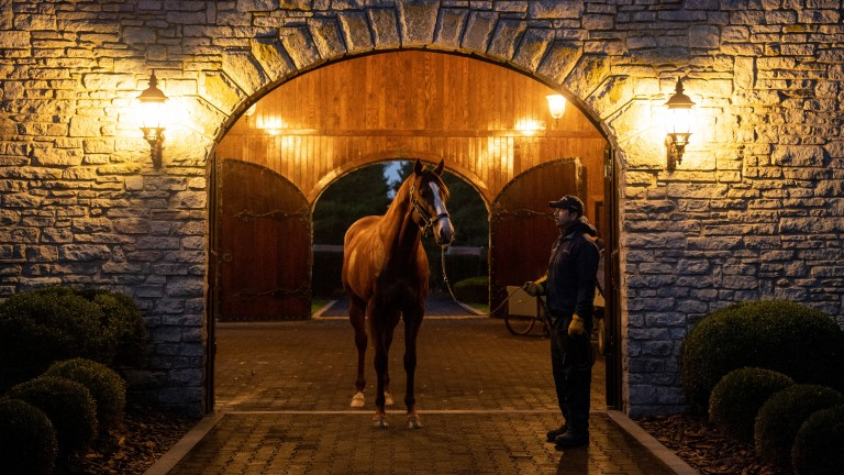 Justify: 'a magnificent horse', says Jane Lyon