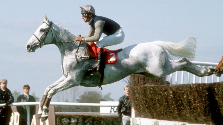 Desert Orchid soars to victory under Simon Sherwood in the 1988 Whitbread Gold Cup