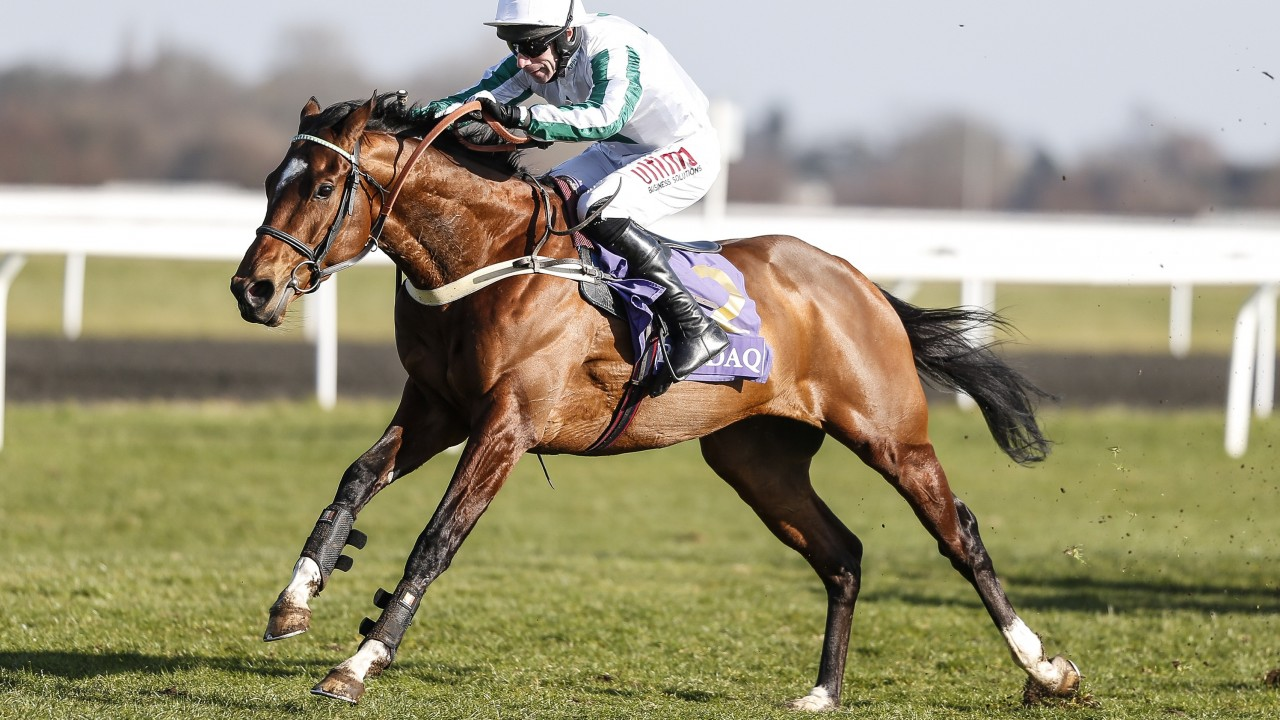 Virginia gold cup betting odds professional sport betting tipstersacademy
