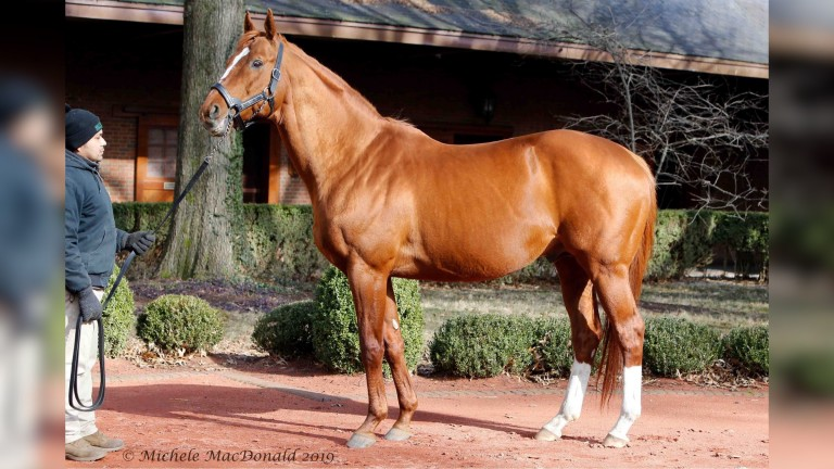 Curlin is Hill 'n' Dale's leading man, and John Sikura is not ruling out having stallions at his new property