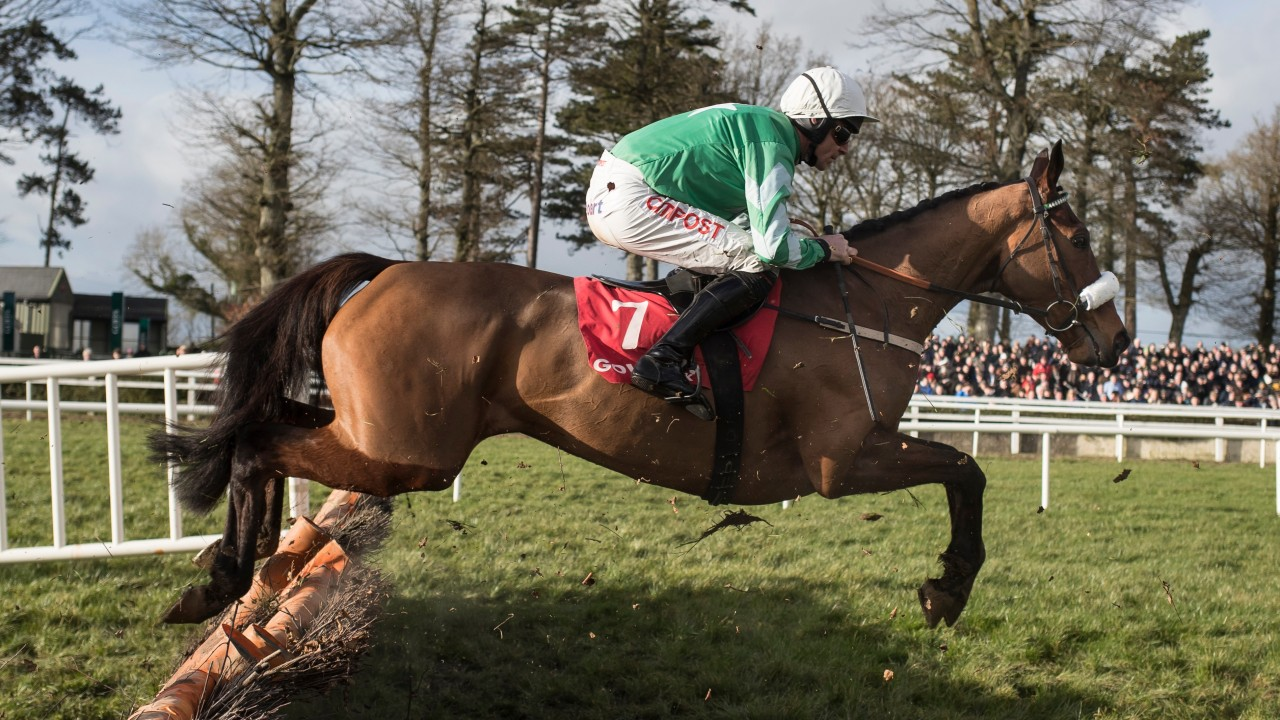 Image result for presenting percy horse