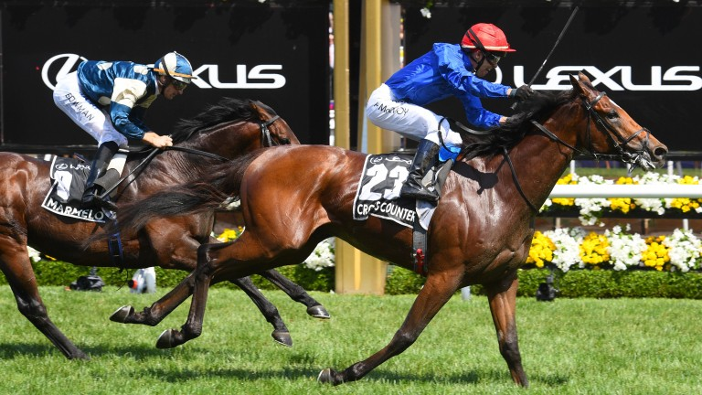 Cross Counter captures the 2018 Melbourne Cup ahead of Marmelo