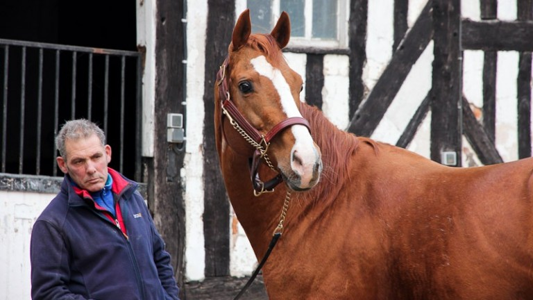 Gemix: son of Carlotamix has his first three-year-olds in racing stables