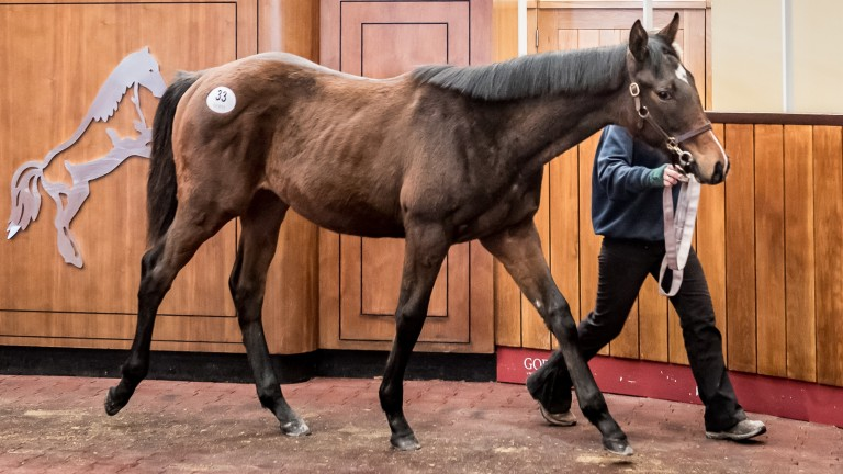 The session-topping Kayf Tara colt, whose three-year-old brother is with Wilson Dennison