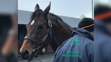 Falco - the sire of Triumph Hurdle hero Peace And Co - was on show at Goffs UK on Tuesday
