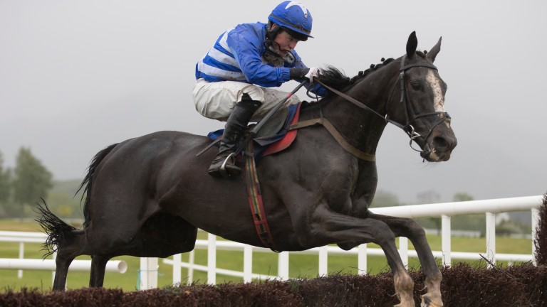 Mr Diablo: has overcome two career-threatening injuries and runs in the Thyestes at Gowran Park