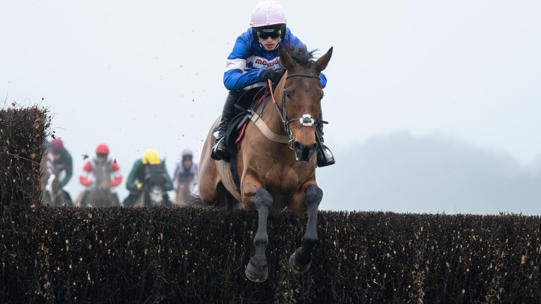Cyrname: runs in the Ascot Chase on Saturday
