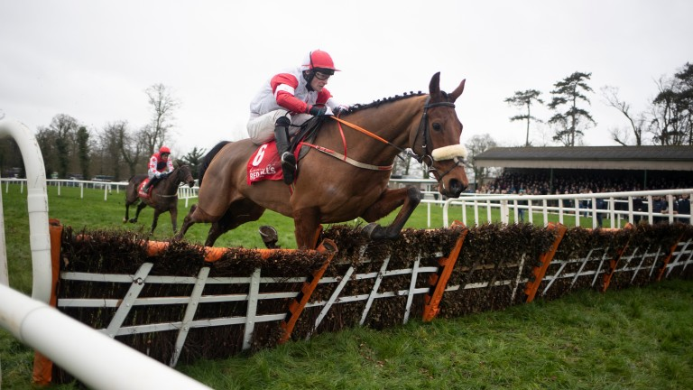 The Big Dog: is being geared towards running in the Albert Bartlett by Peter Fahey