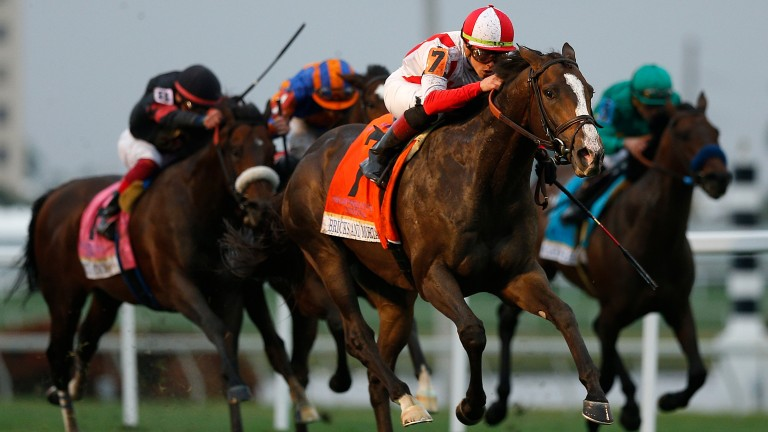 Bricks And Mortar leads them home in the 2019 Pegasus World Cup Turf race, in which the Aidan O'Brien-trained Magic Wand (orange and blue cap) was second