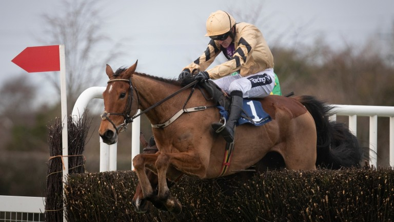 Ballyward: goes for last year's winning combination of Willie and Patrick Mullins