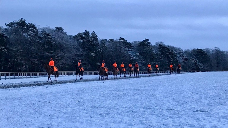 William Haggas' team are easy to spot in their luminous livery on Warren Hill at first lot