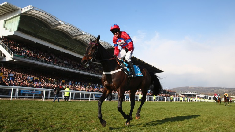 Barry Geraghty celebrates as the rest of the field are still running: Sprinter Sacre's finest hour in the 2013 Champion Chase