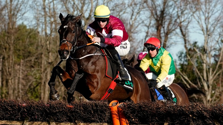 Apple's Jade: brilliant mare is being strongly considered for the Champion Hurdle