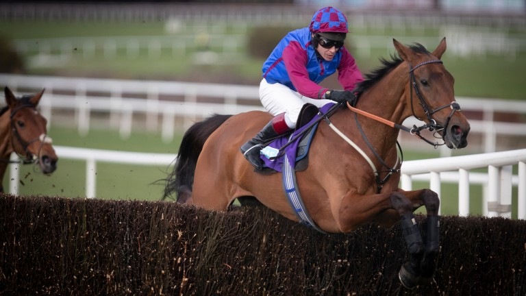 La Bague Au Roi: 5-1 for the Charlie Hall Chase on Saturday with bet365