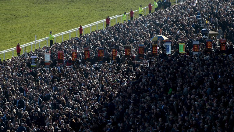 Cheltenham Festival: the packed betting ring during jump racing's most important week