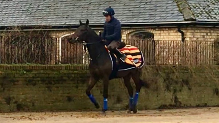 Too Darn Hot approaches Warren Hill on Tuesday morning