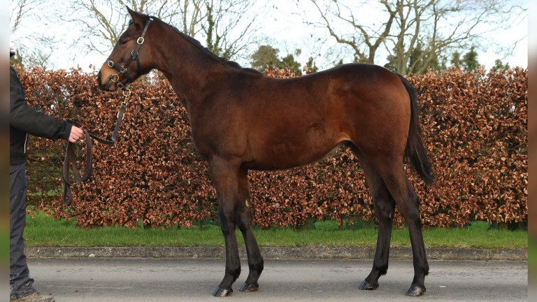 The Sea The Stars colt hammered down to Avaz Ismoilov for ?100,000