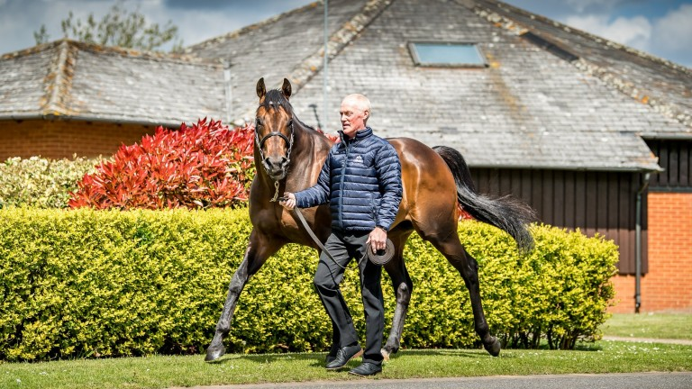 Muhaarar: demand for sprinter could increase