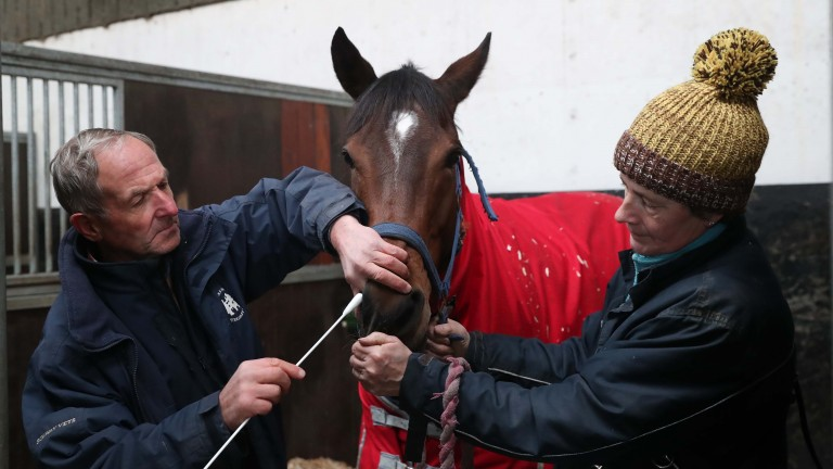 Equine Vet Andrew Miller swabs Iain Jardine's Camile, who won at Ayr on Wednesday