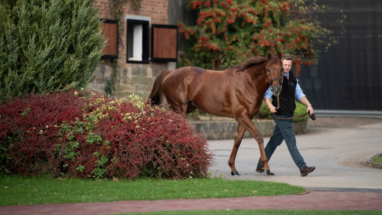 Lightning Spear at the picturesque Tweenhills Stud