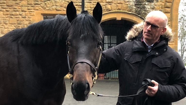 Peter Ebdon gets to know Harbour Law at Batsford Stud