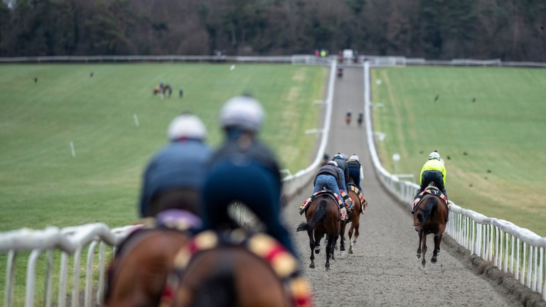 Newmarket's equine population exercise on the Heath. The Flat racing centre has been rocked by the news that four of Simon Crisford's string have tested positive for equine flu