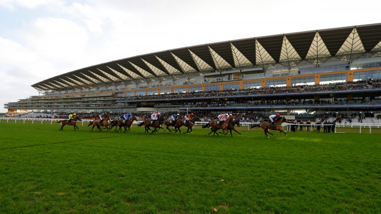 Ascot: will host a spectacular nine-race card on Saturday