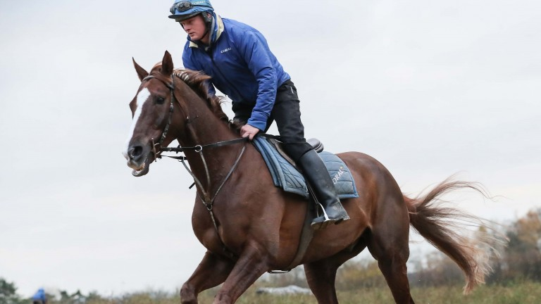 Native River: firmly on course for defence of his Cheltenham Gold Cup crown