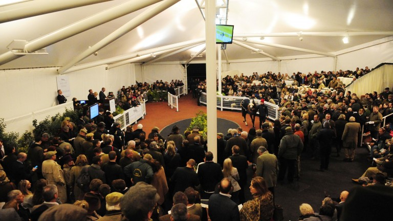 Tattersalls Cheltenham: the stage of the February Sale