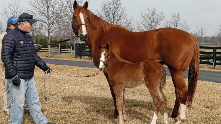 American Pharoah's dam Littleprincessemma with her Tapit filly - future Grade 1 winner Chasing Yesterdays - as a foal