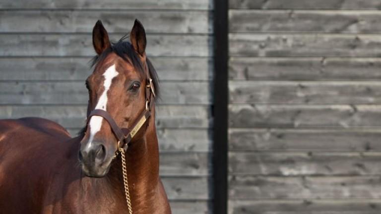 King's Best: sire of eight Group 1 winners including Derby winner Workforce