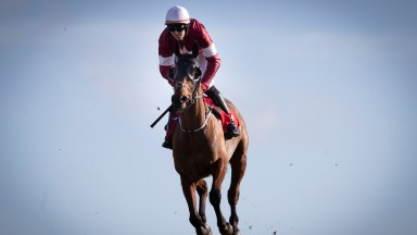 """Gordon Elliott on Tiger Roll: """"He's come out of Cheltenham very well and the plan is to go for the Aintree National."""""""