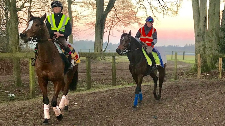 Global Spectrum and Daniel Muscutt (right) follow their lead horse Robero after working on the Al Bahathri