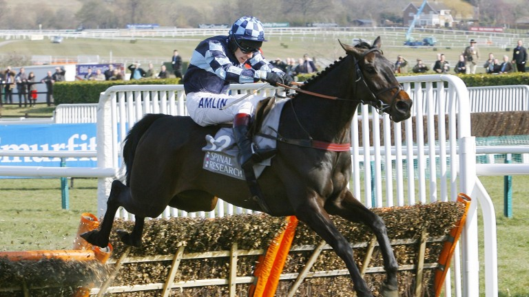 Menorah defeated odds-on favourite Dunguib in the 2010 Supreme Novices' Hurdle