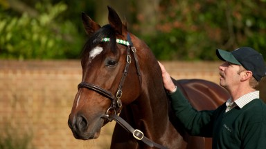 Frankel receives a reassuring pat from Rob Bowley shortly after his arrival at Banstead Manor Stud in 2012