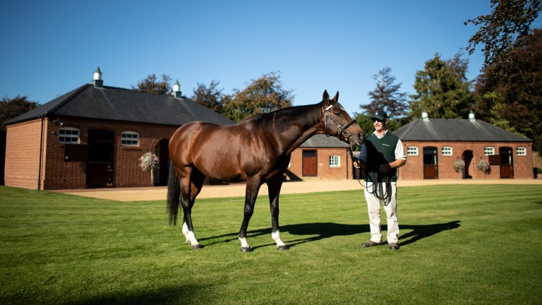 "Rob Bowley on Frankel: ""He knows me and I know him intimately, I know all his little quirks"""