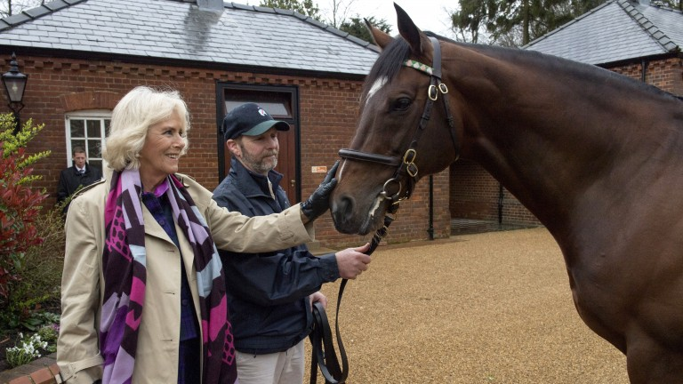 Rob Bowley introduces the Duchess of Cornwall to Frankel