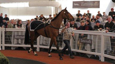 Wide Receiver surveys the scene in the Cheltenham ring before being knocked down for £410,000