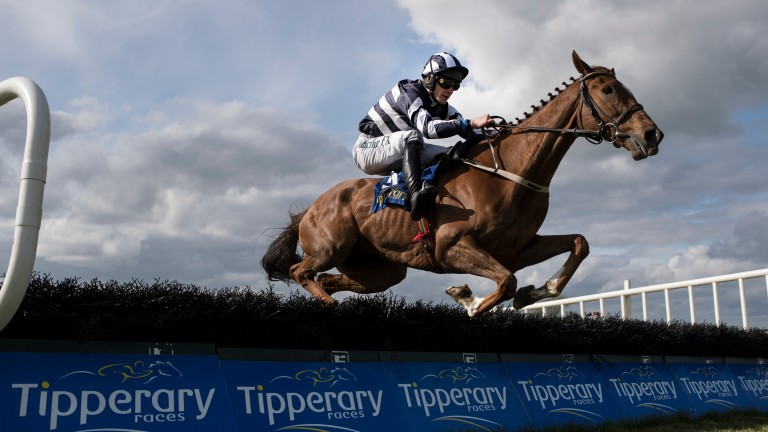 """Prince D'Aubrelle: """"He's a horse who has had his problems but he's always had plenty of ability,""""says trainer Willie Mullins"""