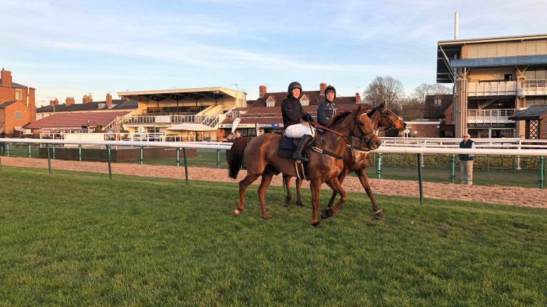 Top Wood (near) and Red Indian after a racecourse gallop at Warwick