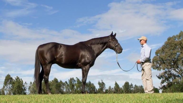 """Lonhro: """"He's becoming an extraordinarily well-regarded broodmare sire"""""""