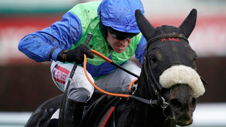 Canardier: Martin Pipe Hurdle his likely festival target