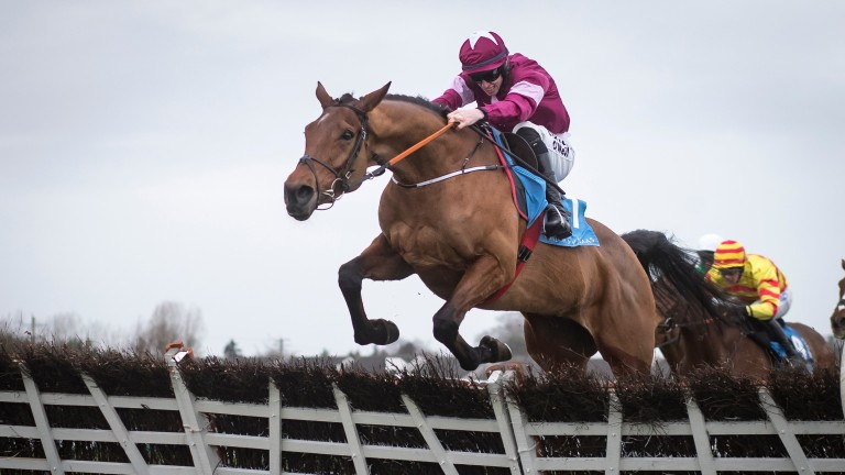 Battleoverdoyen: the unbeaten son of Doyen is among the leading fancies for the Ballymore Novices' Hurdle