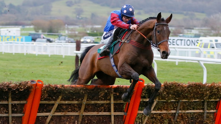 Paisley Park: looks set to go off favourite for the Stayers' Hurdle